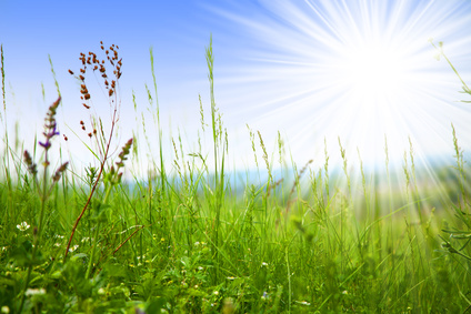 Herbs and Hayfever – The Natural Option